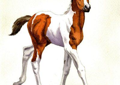 Akvarelové obrazy